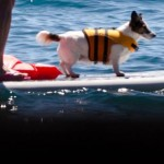 Boating safety dog